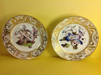 A fine pair of Derby botanical plates