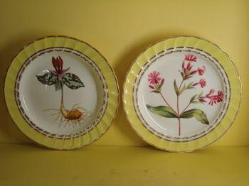 A fine set of twelve Derby botanical plates